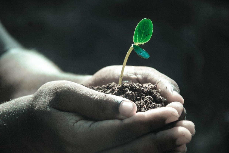 Składniki odżywcze gleby