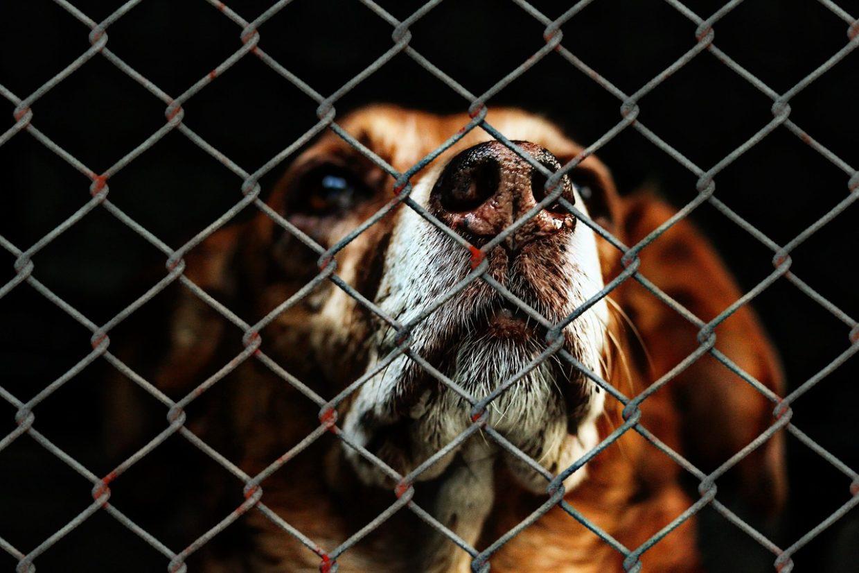jak adoptować psa ze schroniska?