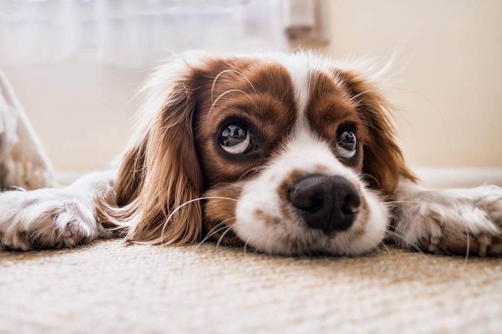 Jak wychować psa - uczymy szczeniaka czystości
