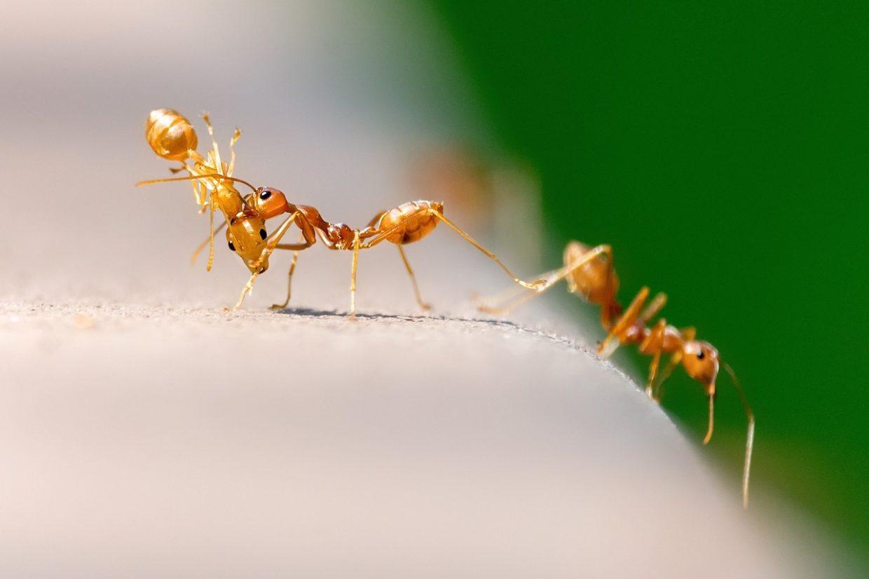 mrówki w domu! jak zwalczyć je domowymi sposobami?