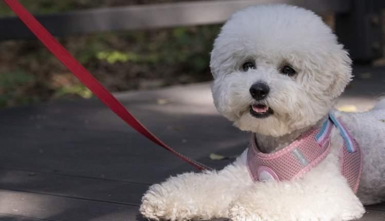 Pies na spacerze - wszystko, co jest mu niezbędne